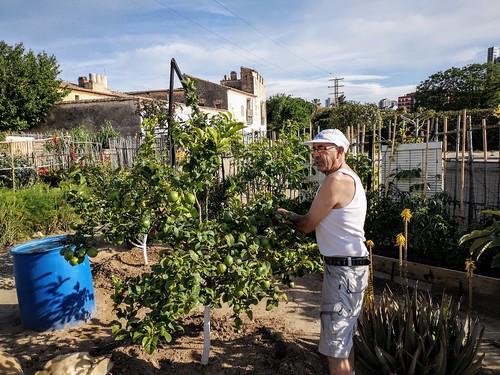 Nacho, el alma de los huertos urbanos alrededor del Casino del Americano y la Alquería de la Torre de Benicalap - Valencia