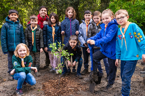 Scouts plant a tree