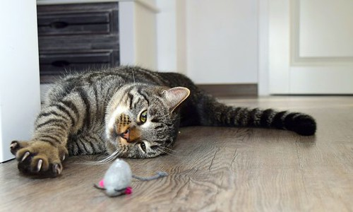 Cat Toys-How To Make Your Cat Happy-Kitten Toys And Ultimate Tips To Keep Them Entertained And Happy