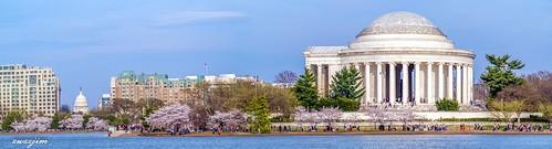 Flower 2019 Cherry Blossom 16