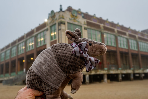 Aggiedillo™ (armadillo) on the Jersey Shore