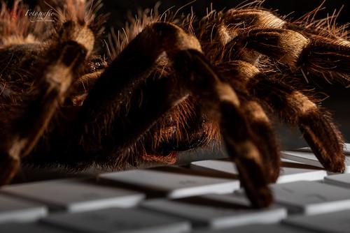 spiderview | 20190429-_MB84638-Bearbeitet- Matthias Bauernschmidt Fotografie.jpg