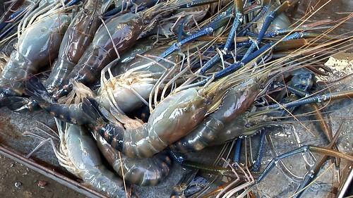 Cambodia - Phnom Penh - Market - Shrimps - 49