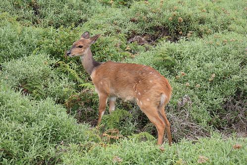 South Africa - Tsitsikamma National Park