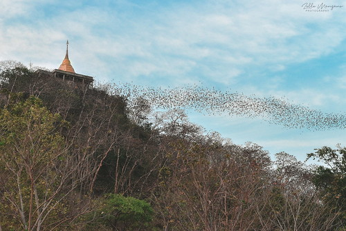 A Swarm of Bats in the Sky