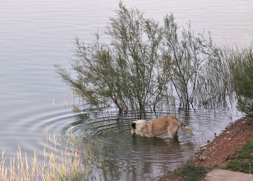 Animalons - Una altra foto del Pelut...