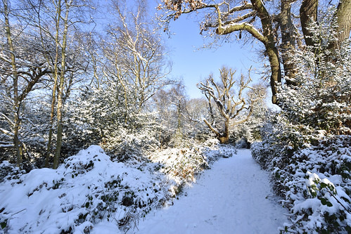 And came the snow  -  (Selected by GETTY IMAGES)