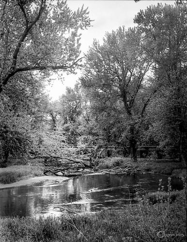 Black River Backwater