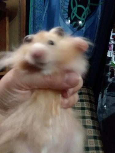 NO, let hamster go