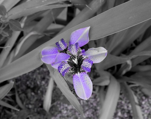 Black and White and Purple