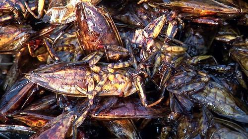 Cambodia - Phnom Penh - Night Market - Fried Cockroaches - 3