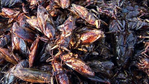 Cambodia - Phnom Penh - Night Market - Fried Cockroaches - 2