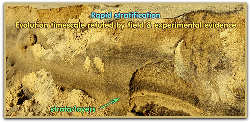 Evolution timescale debunked by field & experimental evidence