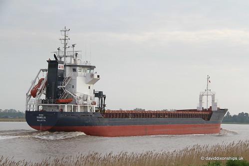 Ship. Kamelia 9188958