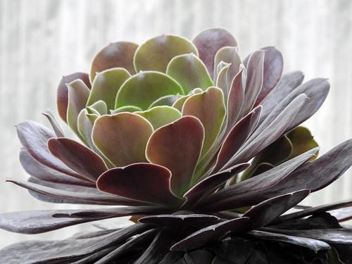 Succulent in light