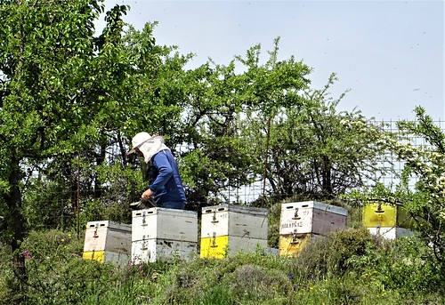 Tending the hives.