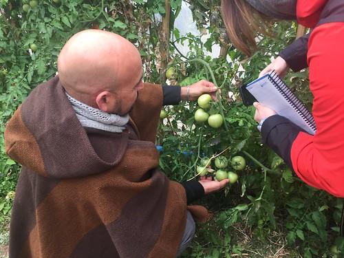 El director de la escuela rural de Samo Alto, Omar Santander, muestra los tomates orgánicos en el invernadero que construyeron los maestros y familiares de los estudiantes, que cuidan el cultivo de diferentes hortalizas y frutales, regadas con agua recicl