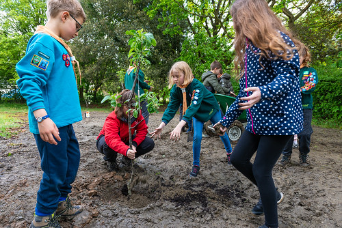 Scouts help to plant a tree
