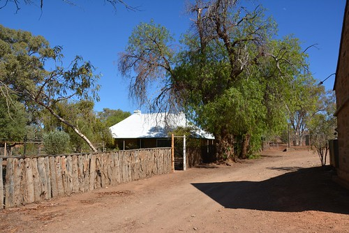 Holowiliena Station homestead fenced block with gnarled old pepper trees, Southern Flinders Ranges South Australia