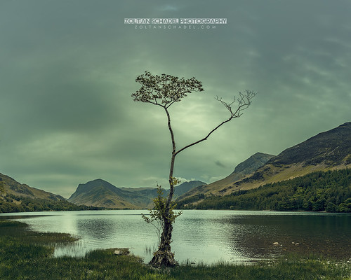 Lone Tree - Buttermere, Lake District, UK