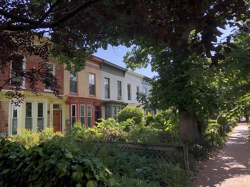 Lush front gardens, Memorial Day on T Street NW, Washington, D.C.