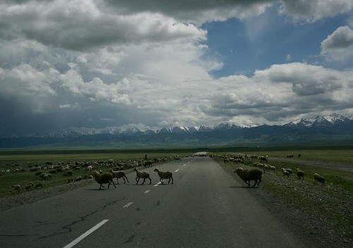 You see more sheep and cattle on the Kazak roads than cars.