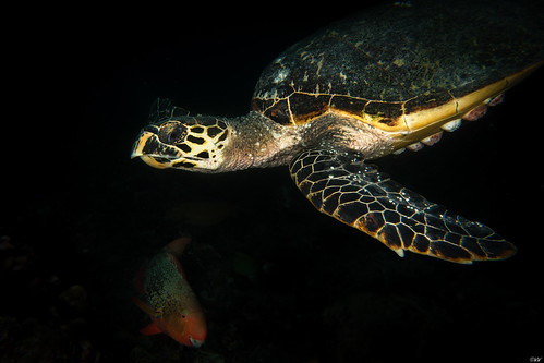 Malediven, MV-Keana
