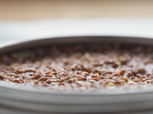 Kresse Gartenkresse Samen Keimling Lepidium sativum  © Garden Cress Edible Plant Seeds ©