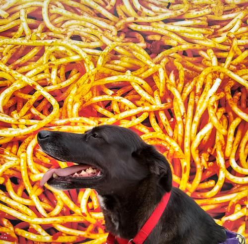 Spaghetti Katla