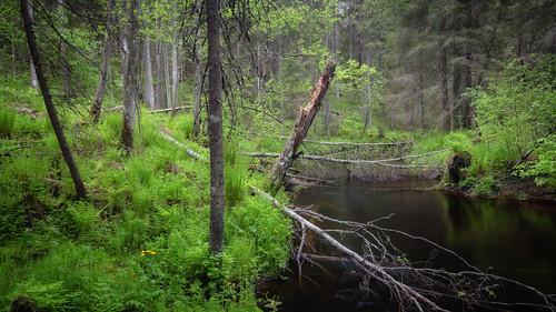 Grove in Juupajoki (Finland) | Juupajoen lehto