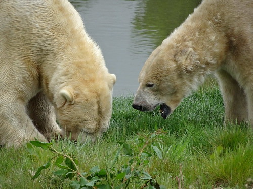 Save some food for me, Victor! (Nobby)
