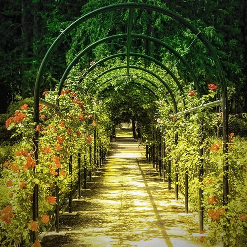 El Camino de Rosas
