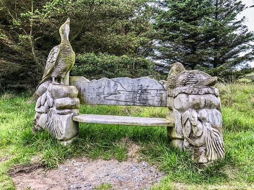 Forvie National Nature Reserve - Ellon Aberdeenshire Scotland - 8/6/19