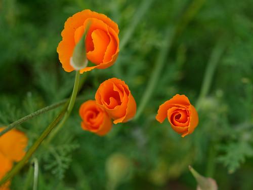 l'motif spiralé dans l'orange
