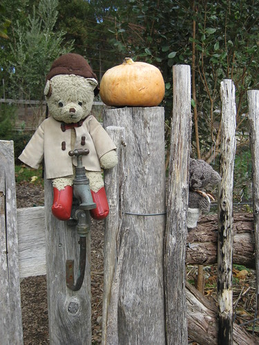 Paddington, Scout and the Gourd in the Garden of St Erth 2.