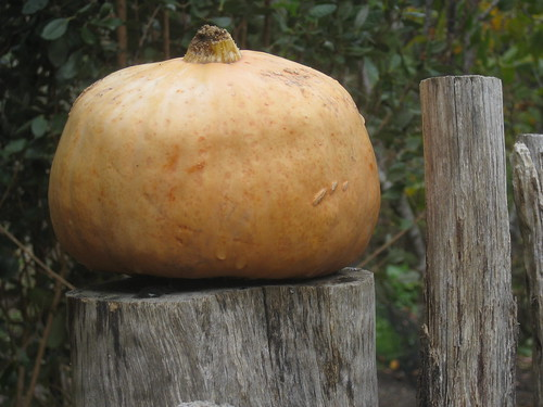 A Gourd Atop a Fencepost; the Garden of St Erth - Simmonds Reef Road, Blackwood