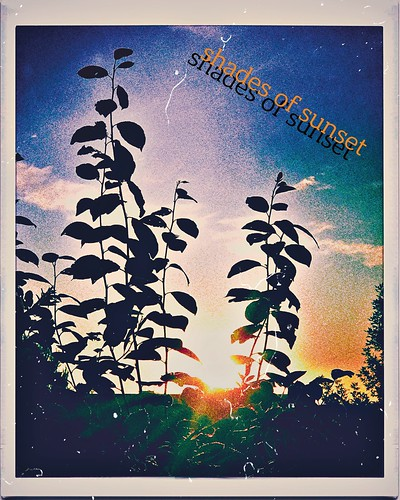***shades of sunset***🌅🌿☀️🎥