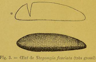 This image is taken from Page 30 of Les moustiques et la fièvre jaune [electronic resource]