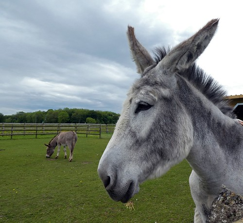 The Donkey Sanctuary annexe in Derbyshire - the last straw