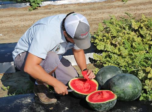 da Silva watermelon