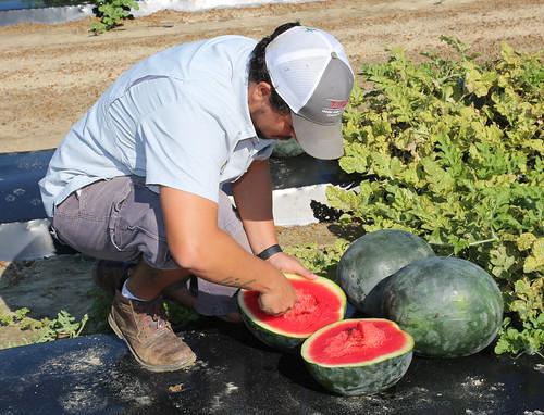 da Silva melons 3