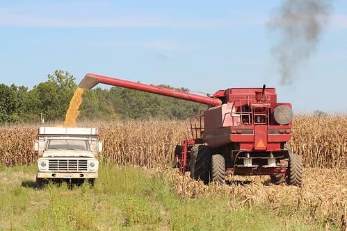 Kaci Walker - Sweet Harvest Time