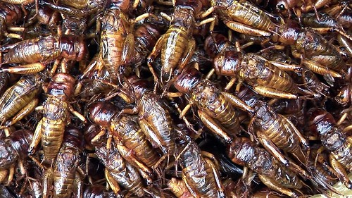 Cambodia - Phnom Penh - Central Market - Grasshoppers - 2