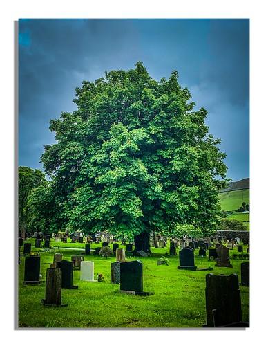 A Conker tree