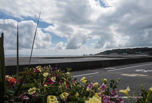 Flowers in Mumbles 2019 06 15 #2