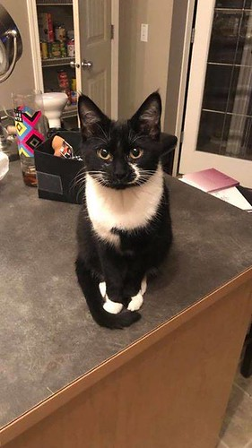 MISSING small dmh female black w/white throat/paws cat in #taradale #saddletowne. Call 403-354-2780 or 587-664-8286 if sighted or found. Pls rt, watch, and share to help find Smudge! YYC Pet Recovery shared a post. Missing kitty , her name is smudge she i