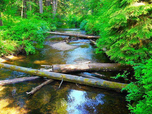 Downed trees cross Silver Creek in Silver Falls State Park