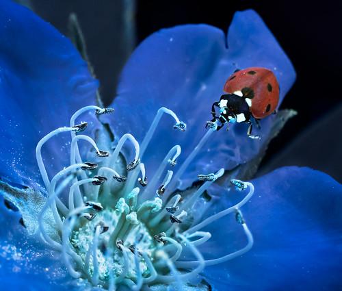 The Ladybug and the Medlar