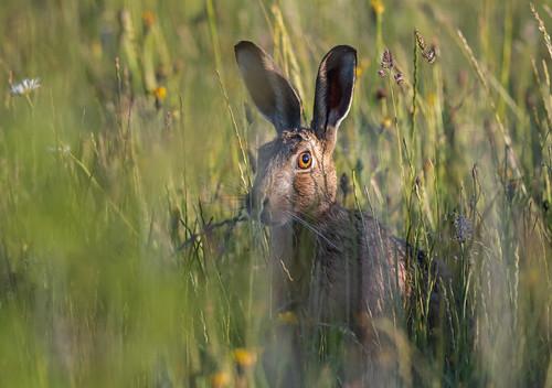 Hare-5054629