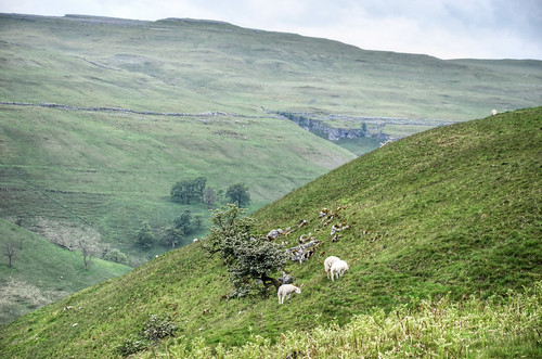 Valley of the Cowside Beck, Yorkshire Dales